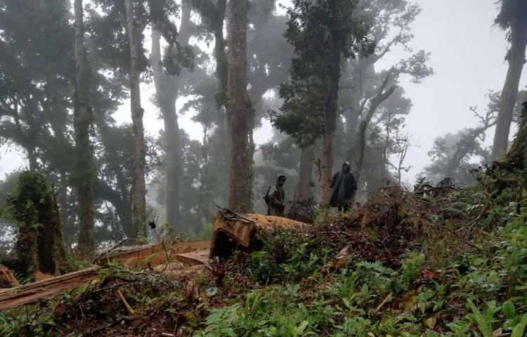 Investigan la tala ilegal en área protegida en Tierras Altas
