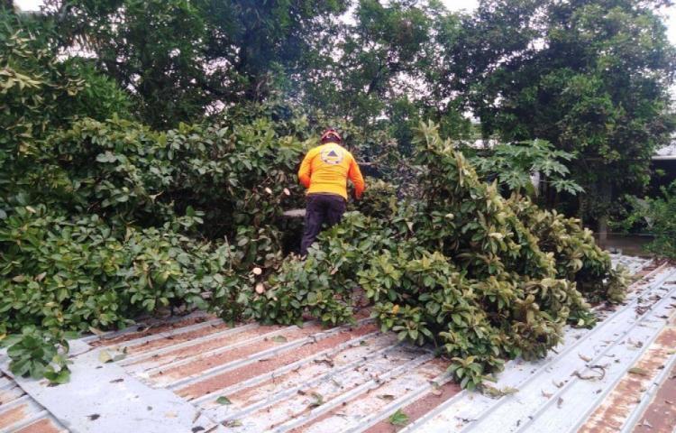 Desprendimientos de techos y caídas de árboles