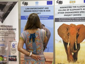 El comercio de jirafas, elefantes y reptiles a debate en la 18ª cumbre CITES