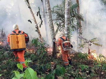 Alarma por incendio en la Amazonía