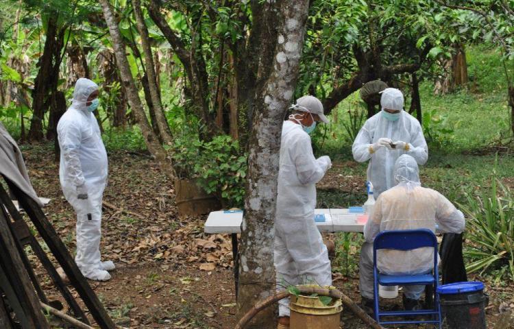 Mujer muere por hanta en hospital de Chitré