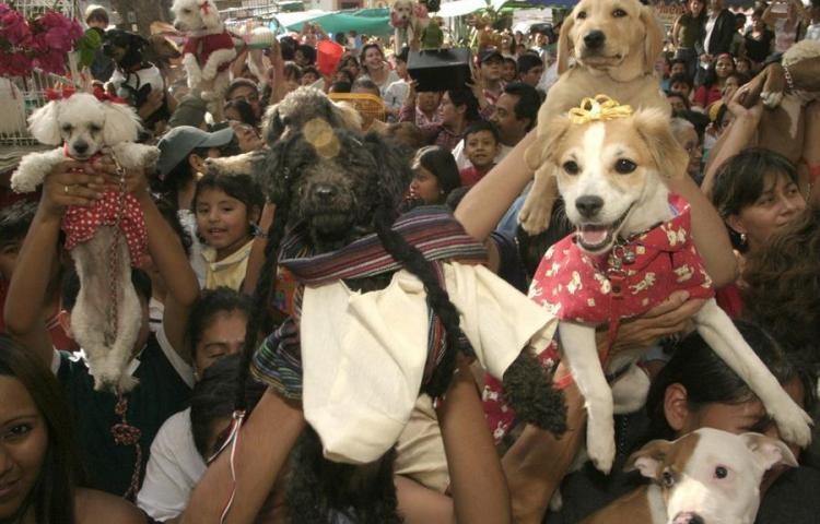 Oaxaqueños bendicen todo tipo de mascotas en iglesia del sur de México