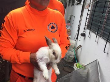 Agentes del Sinaproc rescatan a varios animales en Altos del Chase