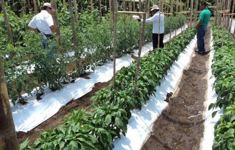 Productores y el Mida tratan el tema de la sequía