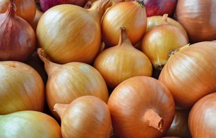 'El precio de la cebolla, no debe rebasar los 0.80 centavos', afirma el Mida