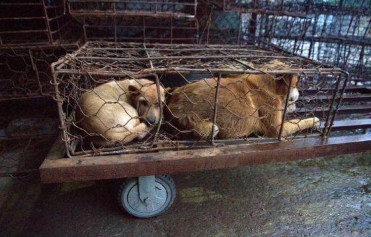 Arrestan a mujer acusada de matar perros y vender su carne en México