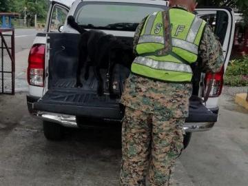 Senafront rescata a menor en Río Sereno, Chiriquí