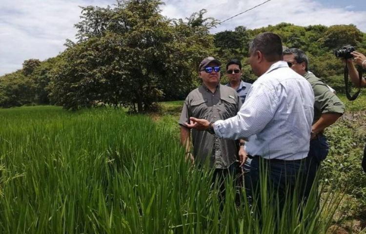 IMA desembolsará 7.7 millones de dólares a los productores nacionales de arroz