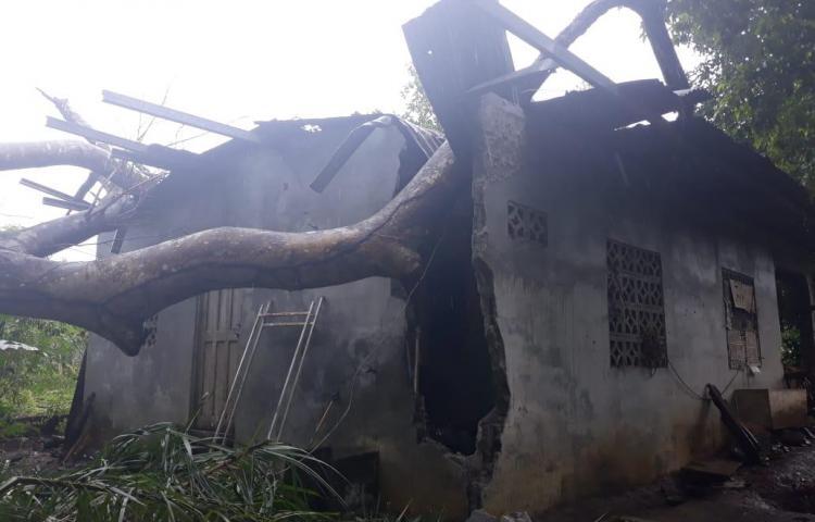 Árbol cae sobre vivienda en Chiriquí