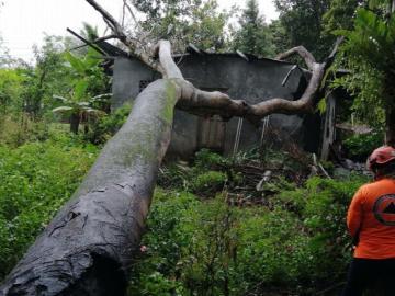 Se salvan de morir aplastados por un árbol