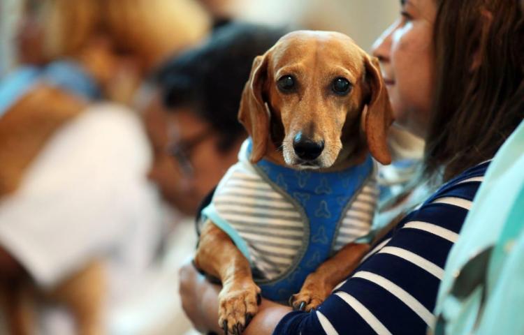 Animales reciben bendición en misa por su patrono San Francisco de Asís
