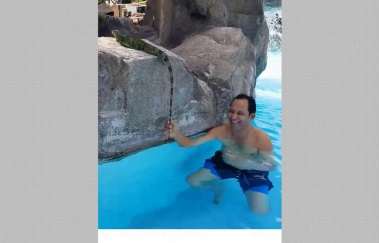 'Neno Vargas' se encuentra con la iguana en la piscina