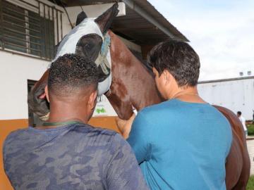 Examinan a equinos clasificados del Caribe