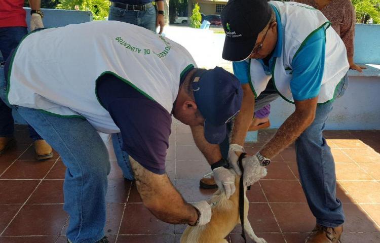 Vacunan a perros y gatos en Santiago. Lucha contra la rabia