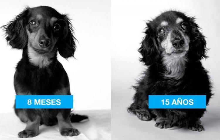 ¿Cómo envejecen los perros?, hermosa y tierna muestra fotográfica