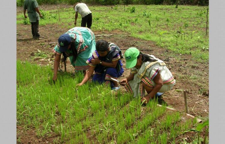 IMA desembolsará $7.7 millones a productores y proveedores en el agro