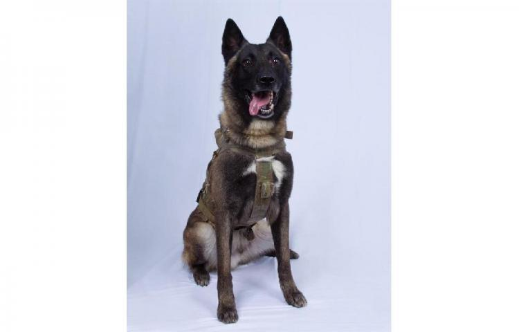 K-9, el perro que encontró al terroristaAl Bagdadi