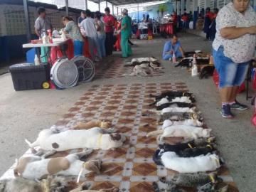 Crearán departamento de Bienestar Animal en San Miguelito