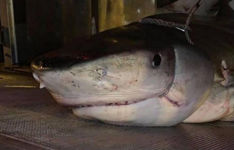 Tiburón se tragó a un turista británico