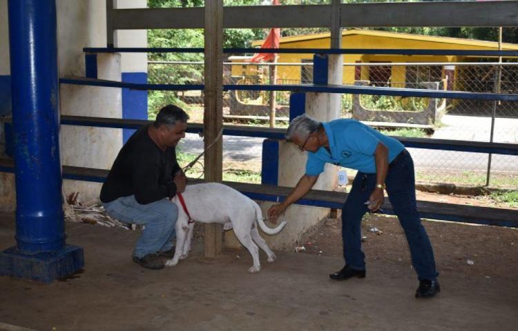 Vacunación contra la rabia en frontera con Costa Rica