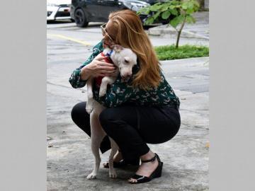 Buscarán apoyo para los animales sin hogar en todo el país