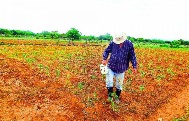 Chepo y Chiriquí en estado de emergencia por escasez de lluvias
