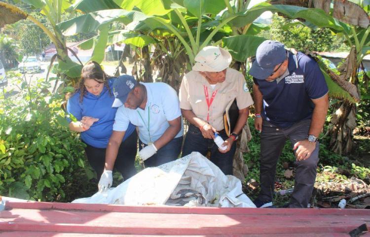 San Miguelito tiene cantidad de criaderos de mosquitos