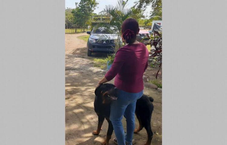Preocupación por matanza de perros en La Villa