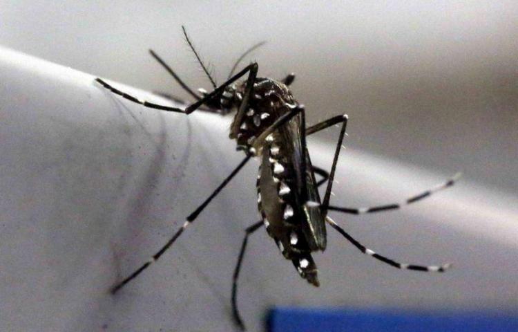 Combaten el Aedes aegypti en barrios de David