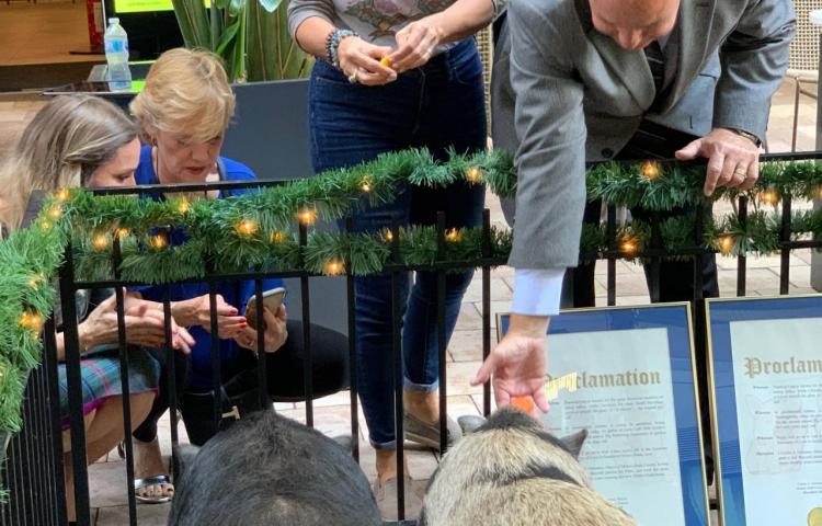 """""""Viva el lechón libre"""", el grito de la ceremonia del perdón porcino en Miami"""