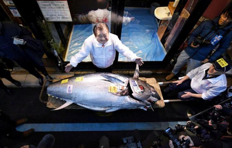 Pagó 1.8 millones de dólares ¡por un atún! en subasta
