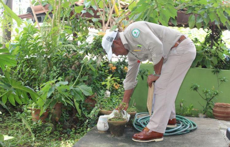 El 2019, cerró con cinco muertes por dengue