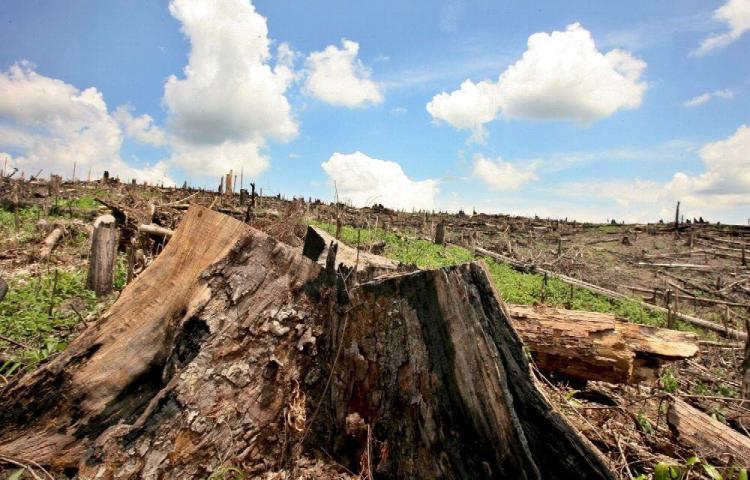 Empeora la deforestación en la Amazonía