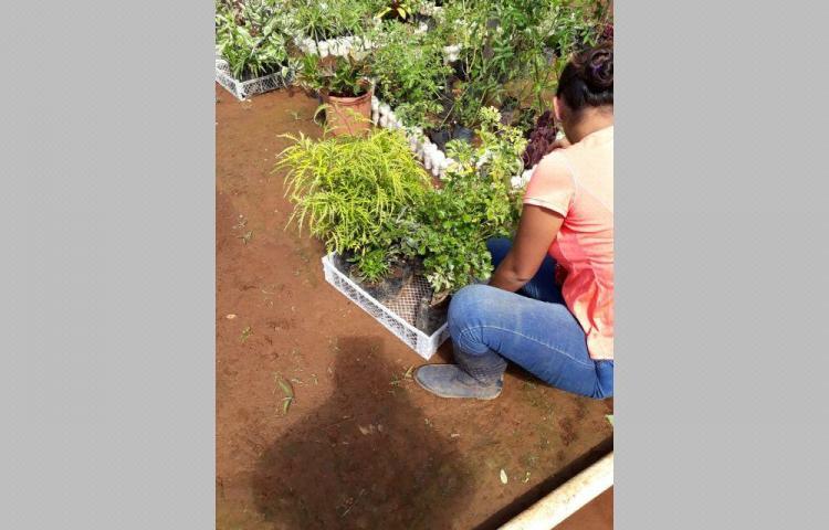 Confeccionarán jardín hacia el volcán Barú en Chiriquí