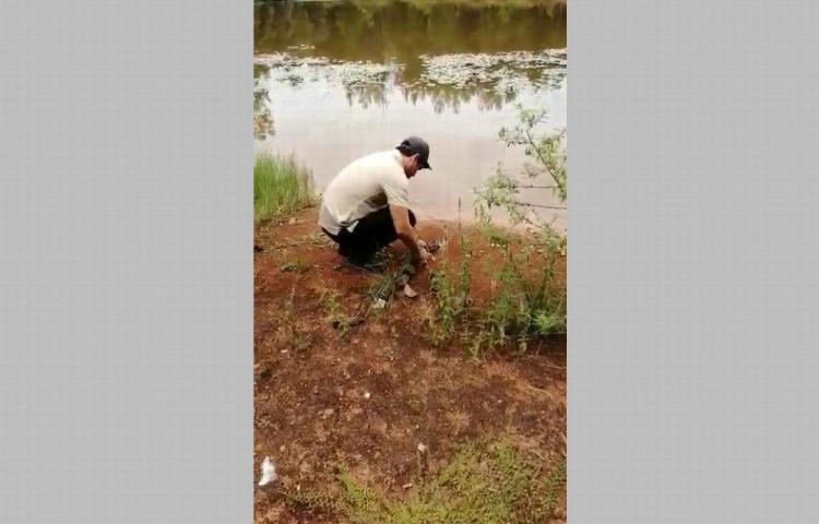 Rescatan a réptil en una finca agrícola en Chiriquí