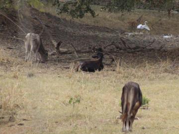 Ganaderos en alerta porque ríos y lagos se están secando