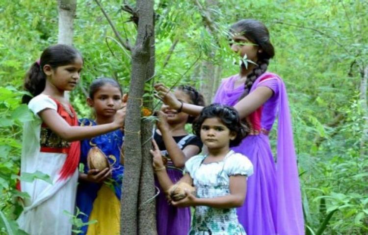 Plantan 111 árboles al nacer una niña
