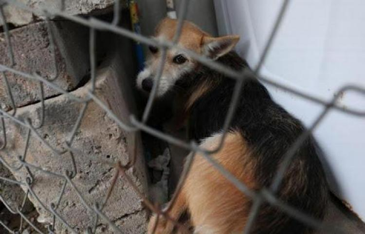Dirección de Gestión Ambiental presenta informe a la DIJ por muerte de mascota