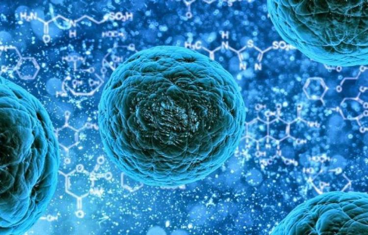 Hallan virus con material genético desconocido en Brasil