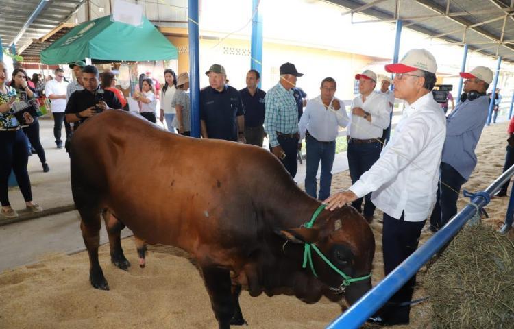 Panamá estudia la posibilidad de exportar carne bovina a EE.UU