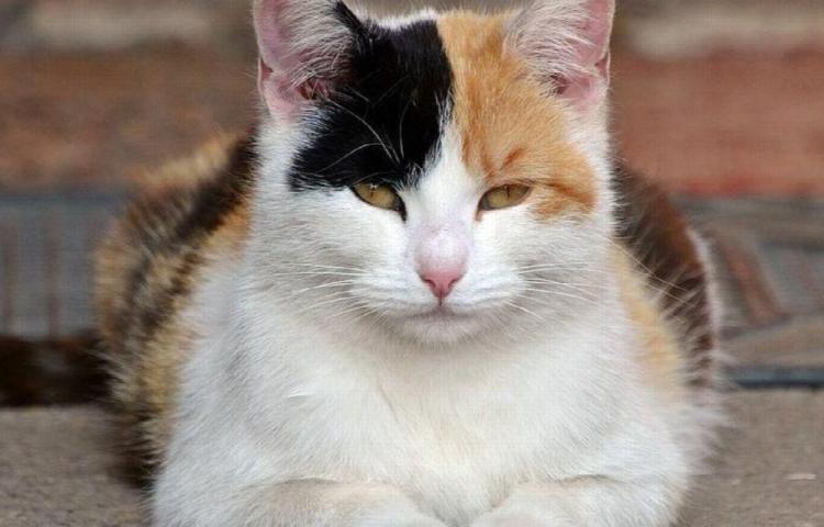 Un gato le salvó la vida a su dueña