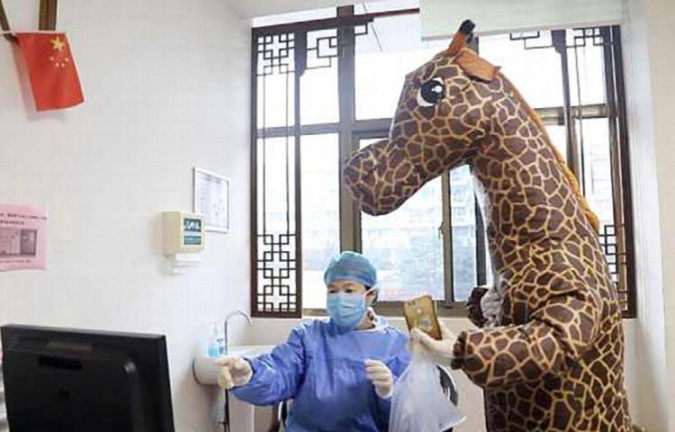 Una jirafa busca atención médica en el hospital