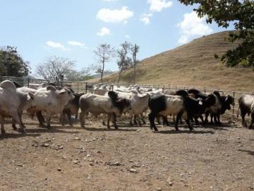 Le tiran la toalla a productores por la severa sequía