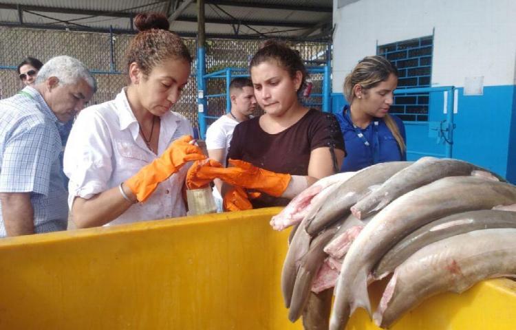 Decomisan carne de tiburón y aletas en el puerto de vacamonte