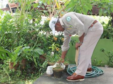 El Minsa registra 656 casos de dengue y una defunción