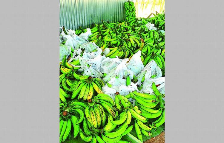 Analizarán iniciativa para exportación de alimentos