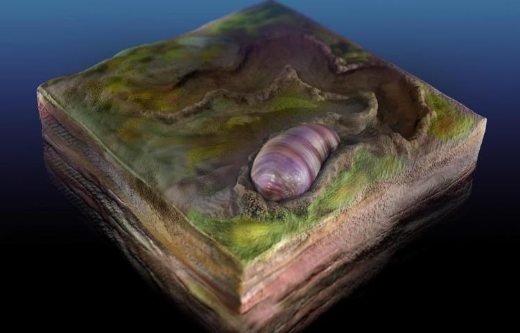 El ancestro de todos los animales está en un fósil australiano