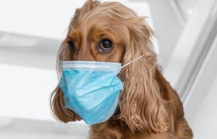 Dueños de mascotas deben respetar el horario establecido por el Minsa