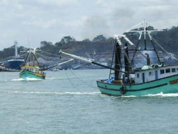 ARAP niega la emisión de licencias para pescas de tiburones