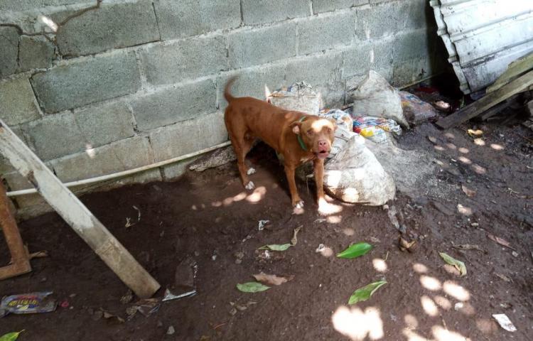 Rescatan a perro maltratado en San Miguelito